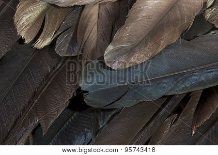 Layer Of Birds Feathers Showing Various Colors