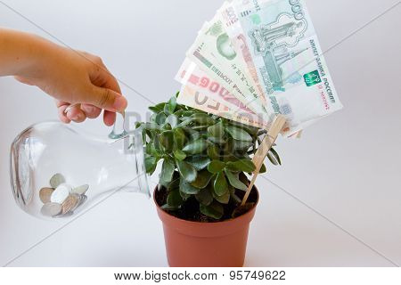 Care Money Tree
