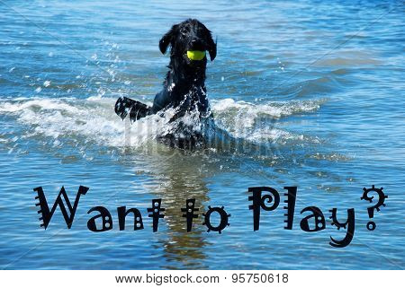 Dog With Ball In Water Want To Play