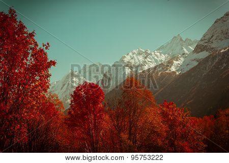 The mountain autumn landscape