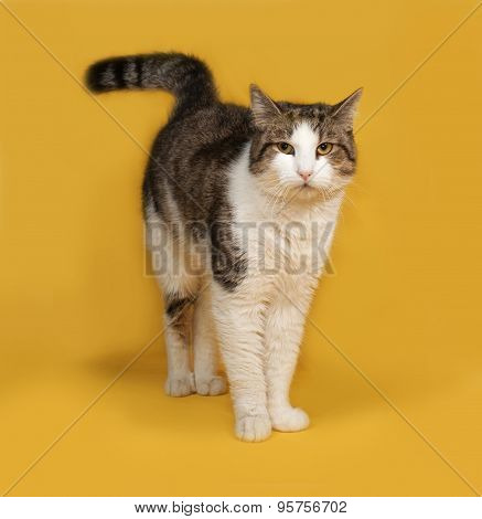White And Striped Fluffy Cat Standing On Yellow