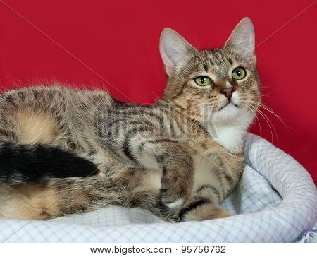 Striped And White Cat Sitting In Couch On Red