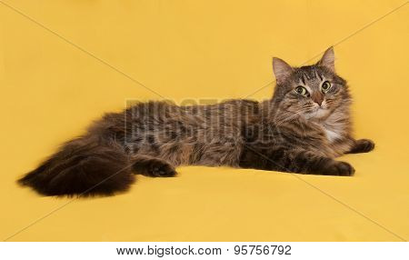 Fluffy Tabby Cat Lies On Yellow
