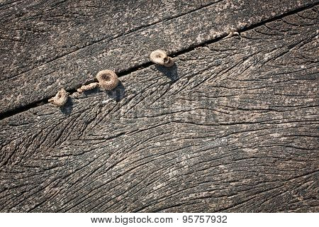 Wood texture close up with natural patterns and mushrooms, darker version