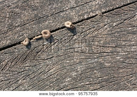 Wood texture close up with natural patterns and mushrooms