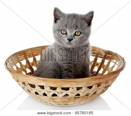 Cute gray kitten in wicker basket isolated on white