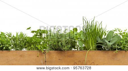 Seamless decorative border with herbs in wooden box isolated on white background