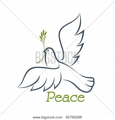 Dove of peace with green olive
