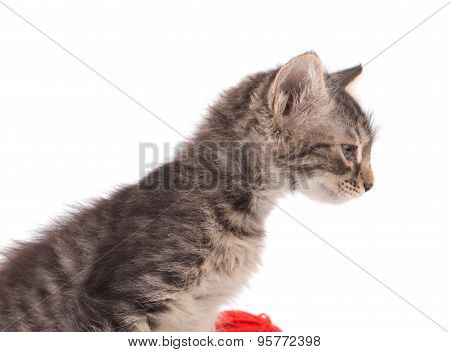 Curious little kitten.