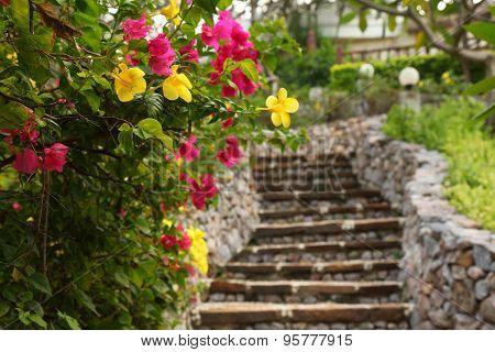 The staircase in a tropical garden