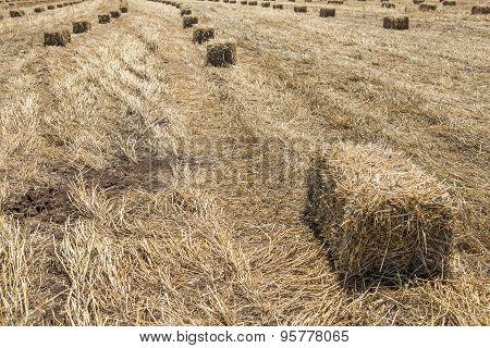 Wheat haystack