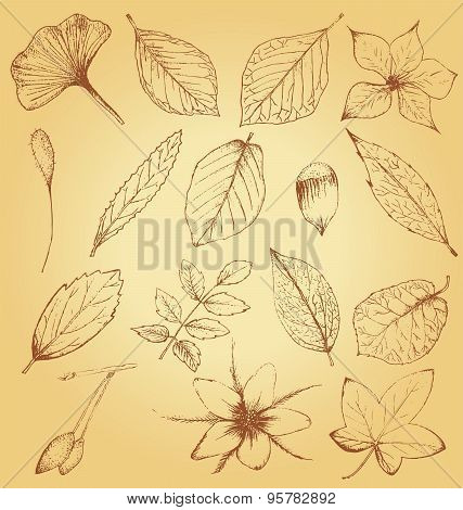 Collection Of Hand Drawn Plants, Leaves