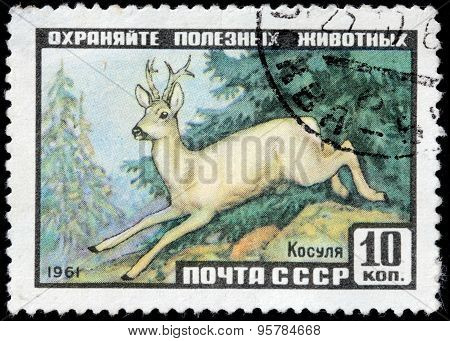Roe Deer Stamp