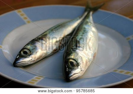 Fresh fish on the plate
