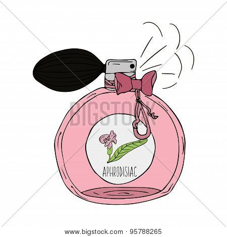 Hand Drawn  illustration of a perfume bottle with the scent of aphrodisiac