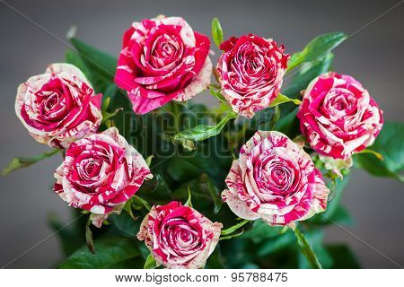 Bouquet Of Striped Roses