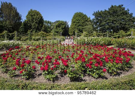 Queen Marys Gardens In Regents Park, London