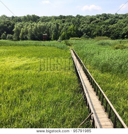 View over a green field