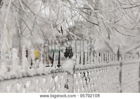 Fence Close Up