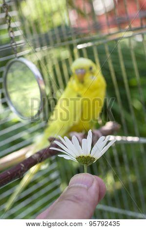 Feeding A Bird