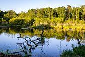 stock photo of wetland  - Wetlands terrain during sunset  - JPG