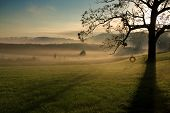 stock photo of tire swing  - Early morning Tennessee landscape at Seven Islands Wildlife Refuge
