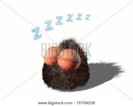 Wobby is sleeping