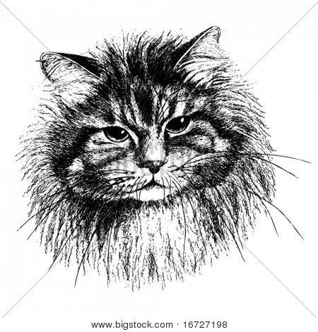 Cat (vector illustration).