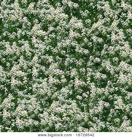 Little white flowers seamless background. (See more seamless backgrounds in my portfolio).