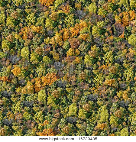 Forest seamless pattern. View from above.