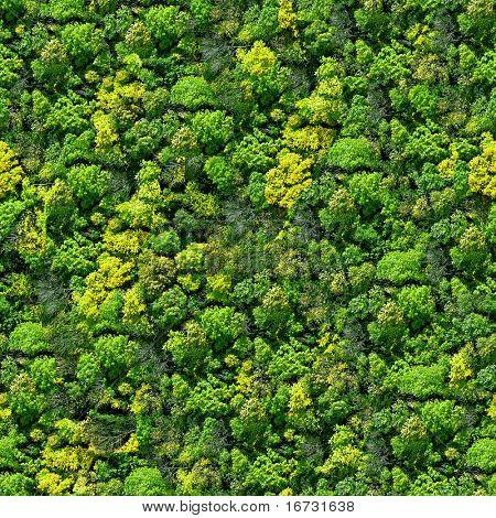 Patrones sin fisuras de bosque - vista desde arriba.