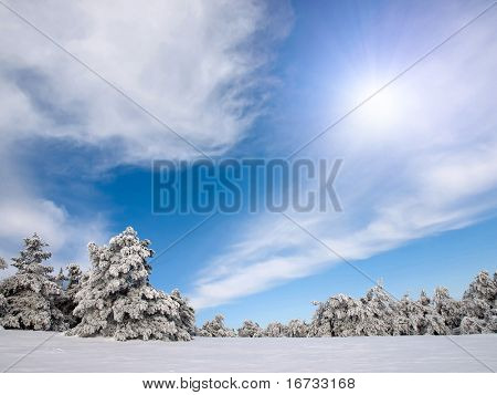 Wintry spruce forest with sun on blue sky.