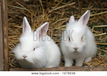 Two Baby Rabbits