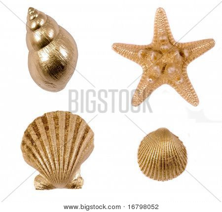 golden sea shells