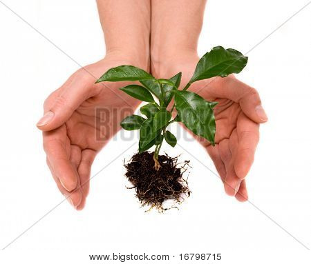 young plant in woman hand