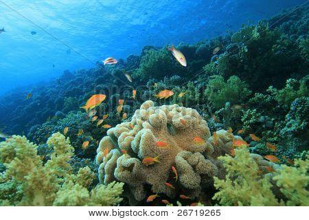 Pristine coral reef