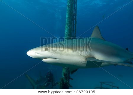 Shark on Shipwreck