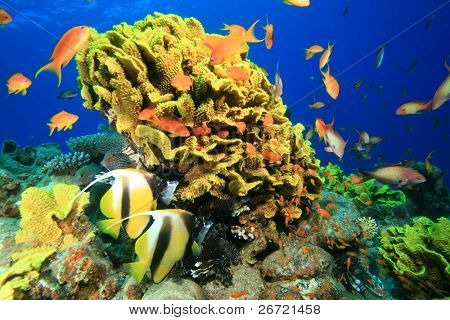 Tropical Coral Reef and Fishes