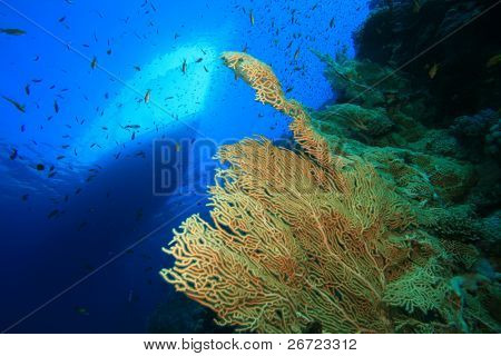 Gorgonian Fan Corals and Diving Boat in the Red Sea