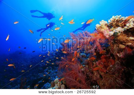 Scuba Divers explore a tropical coral reef
