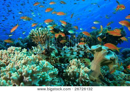 Tropical Fish on a coral reef in the Red Sea