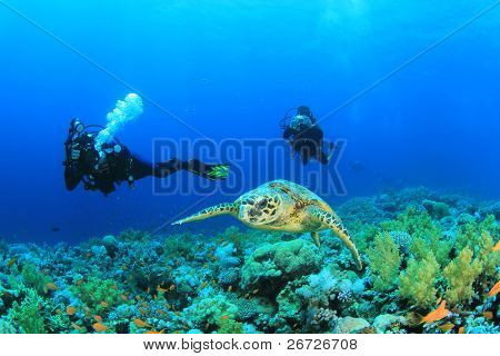 Underwater Photographers take still images of a Hawksbill Sea Turtle on a coral reef