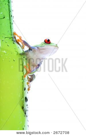 Frog On Glass Isolated White