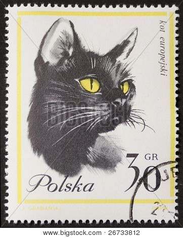 POLAND - CIRCA 1964: a stamp printed in Poland shows image of a beautiful black cat's head with yellow eyes. Poland, circa 1964