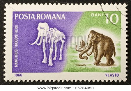 ROMANIA - CIRCA 1966: a stamp printed in Romania shows image of Mammoth and his fossil skeleton. Romania, circa 1966