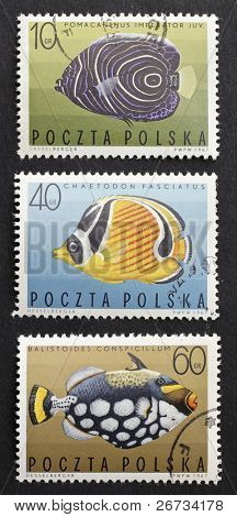POLAND - CIRCA 1967: three stamps printed in Poland shows image of coloured fishes: Pomacanthus Imperator, Chaetodon Fasciatus and Balistoides Conspicillum. Poland, circa 1968