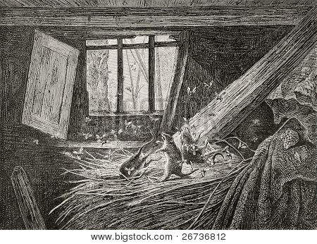 Old illustration of struggle between hornets and rats. From drawing of Mery, engraved by Cosson-Smeeton, published on L'Illustration, Journal Universel, Paris, 1868