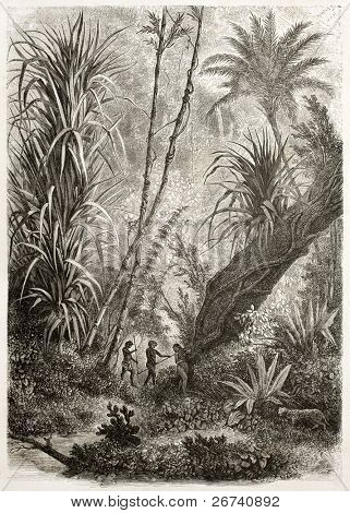 Old illustration of virgin forest in Car Nicobar, Indian ocean.  Created by De Bar after sketch of Steen-Bille, published on Le Tour du Monde, Paris, 1860