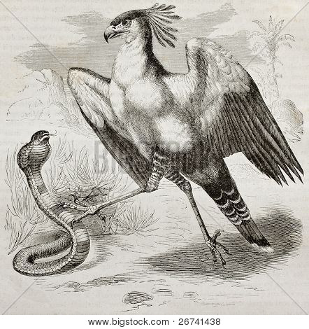 Old illustration of Secretarybird (Sagittarius serpentarius). Created by Kretschmer, published on Merveilles de la Nature, Bailliere et fils, Paris, 1878