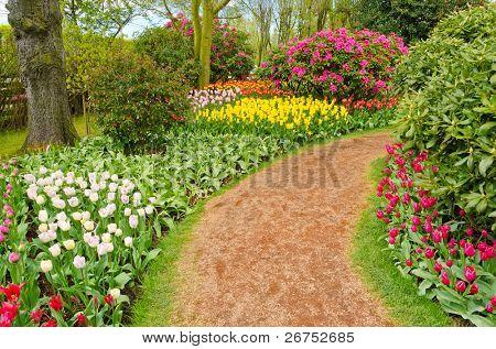 Garden of tulips at Skagit, Washington State, America.